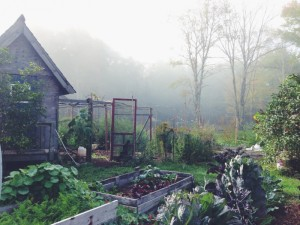 Chicken pen in mist